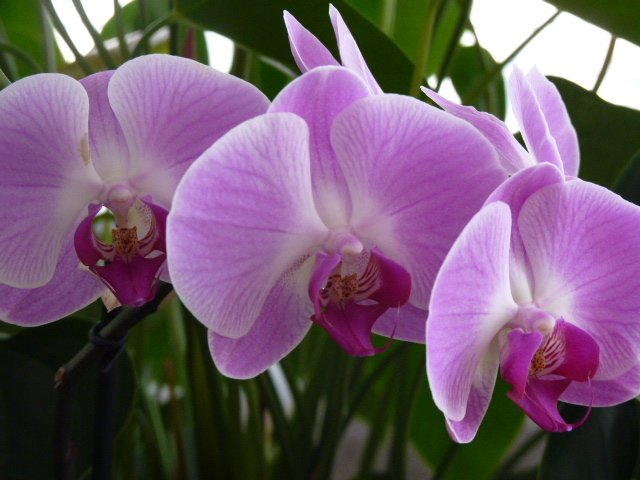 chris fleurs idris 003