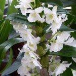 chris fleurs idris 004