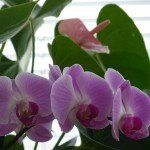 chris fleurs idris 005
