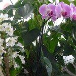 chris fleurs idris 007