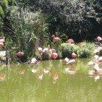 <b>parc des oiseaux,canet 076</b> <br />