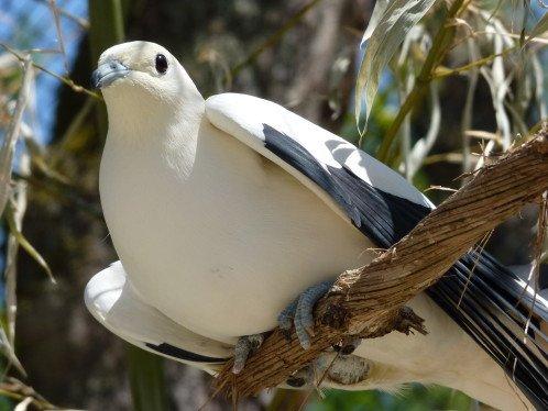 parc-oiseaux-2012-009