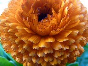 fleurs 004